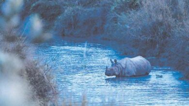 Photo of Rhino population in Nepal grows in conservation boost