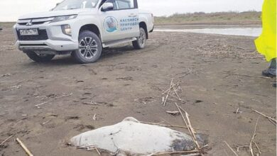 Photo of 170 endangered seals found dead on Russia's Caspian coast