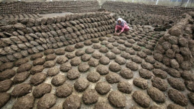 Photo of Manure hunt underway in India after thieves steal cow dung